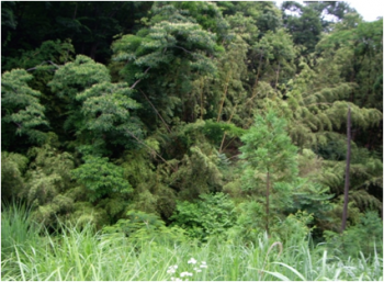 manabi forest1.png